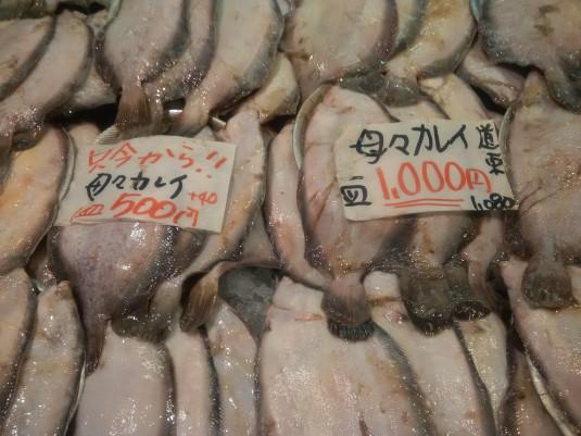 魚 (2)
