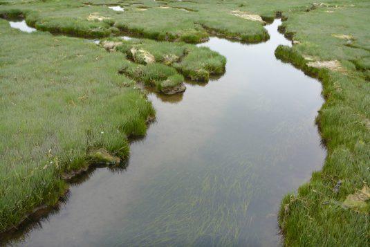湿原模様 (1)