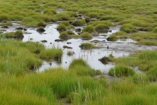 湿原模様 (4)