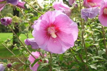 季節の花 ―3