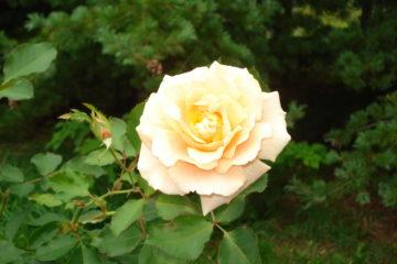 季節の花 ―4